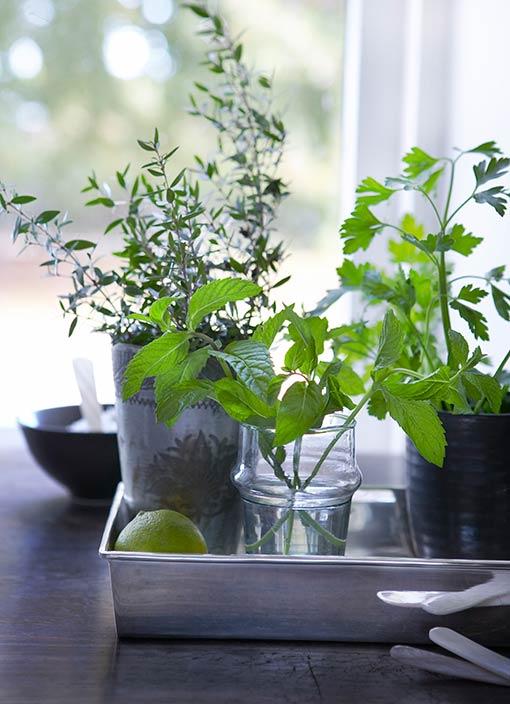 Decorar tu cocina con plantas - Plantas en la cocina ...