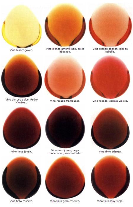 tipos-colores-vinos